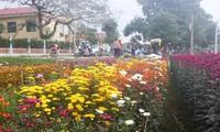 Xuân ở làng hoa Đông Cương, tỉnh Thanh Hóa