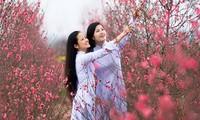 Mùa xuân trong các ca khúc Việt Nam
