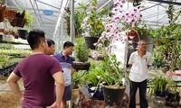 Thành lập Trung tâm Nghiên cứu bảo tồn và phát triển Hoa lan Việt Nam