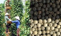 Building Vietnam pepper trademarks