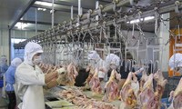 First shipment of Vietnamese chicken destined for Japan
