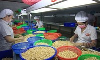 越南进出口额增长达到令人印象深刻的水平
