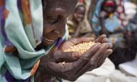 ประชาคมโลกเรียกร้องการขยายความร่วมมือเพื่อความมั่นคงด้านอาหาร