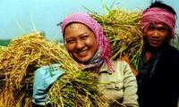 Mejoran producción agrícola para garantizar seguridad alimentaria