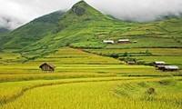 Ejemplos en construcción de grandes arrozales en provincia montañosa de Yen Bai