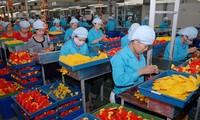 Esfuerzos vietnamitas en atracción de inversión extranjera directa