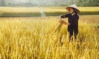 Vietnam se esfuerza en garantizar la seguridad alimentaria en la región