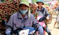 Lichis y longans vietnamitas en Estados Unidos a finales de 2014
