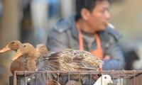 Registrados 6 casos nuevos de la influenza en China