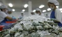 Disminuyen impuesto antidumping para camarones exportados por Vietnam