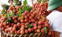 Fruta vietnamita penetra en mercado canadiense