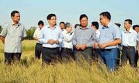Delta del río Mekong en batalla contra sequía y salinización del suelo