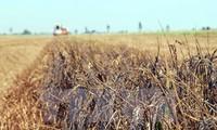 Esfuerzos contra reloj en apoyo a compatriotas afectados por sequía y salinización del suelo