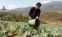 Ma A Nu, un empresario ejemplar de la etnia Mong en Sa Pa