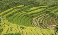 Convertirán a Sapa en Zona Turística Nacional de Vietnam antes de 2030