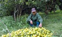 Bac Kan fomenta conexión entre provincias para salida de productos agrícolas