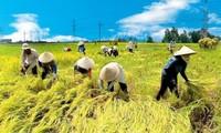 Agricultura vietnamita por superar retos en 2017