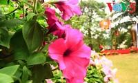 Flores primaverales alegran zona urbana ecológica