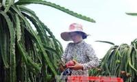 Vietnam y Alemania impulsan comercio de frutas y verduras
