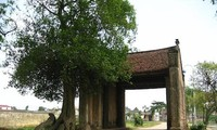 Rasgos típicos de las aldeas en el Delta del río Rojo