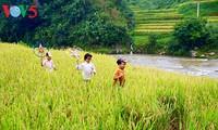 Terrazas de arroz en Mu Cang Chai, paisaje majestuoso del noroeste vietnamita