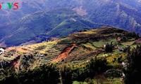 Piden promover turismo en la región del Noroeste vietnamita
