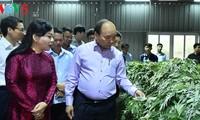 Vietnam busca desarrollar la industria medicinal