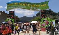 Celebran en la meseta de Moc Chau IV Fiesta de Recolección de Frutas