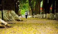 Canciones vietnamitas famosas sobre el otoño