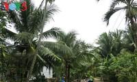 Ben Tre: un reino de cocoteros