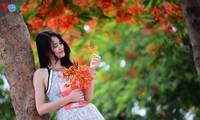 Bunga-bunga musim panas mekar di jalan-jalan kota Hanoi