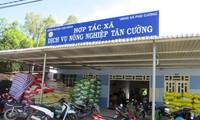 Memperkenalkan sepintas lintas tentang pola koperasi di Vietnam