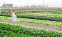越南农业将从TPP受益