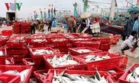 平定省渔民年初出海渔获丰收