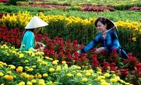 Sa Dec flower village attracts visitors at Tet