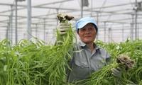 Vietnam, Israel promote cooperation on labor