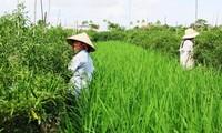 Mô hình nông nghiệp 3 trong 1 giúp nông dân huyện Yên Khánh, Ninh Bình, thoát nghèo