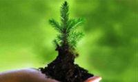 Hoàn thiện đánh giá môi trường chiến lược, tác động môi trường và cam kết bảo vệ môi trường