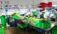 Nhân rộng mô hình nông nghiệp công nghệ cao phục vụ tái cơ cấu