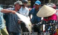 Hỗ trợ ngư dân khai thác vụ cá Nam