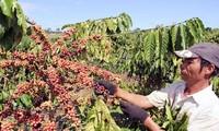 Diễn đàn liên kết chuỗi trong phát triển cà phê bền vững ở Tây nguyên