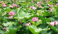 Thính giả hỏi về các loại hoa quả mùa hè; thông tin về Khu di tích lịch sử Kim Liên