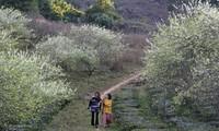 Du lịch trải nghiệm trên cao nguyên Mộc Châu