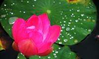 Tư vấn cho thính giả một số vấn đề quan tâm và thông tin về ngày 7-7 âm lịch của người Việt