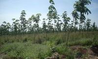 Tăng cường công tác bảo vệ và phát triển rừng