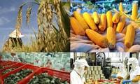 มูลค่าการส่งออกผลิตภัณฑ์การเกษตร ป่าไม้และสัตว์น้ำใน6เดือนแรกของเวียดนามบรรลุ1หมื่น4พันล้านเหรียญสหรัฐ