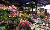 ตลาดดอกไม้ในจังหวัดลาวกายคึกคักในช่วงตรุษเต๊ด