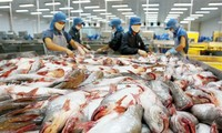 นโยบายการคุ้มครองการเกษตรของสหรัฐสร้างความเดือดร้อนให้แก่การส่งออกปลาสวายของเวียดนาม
