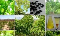 พัฒนาการวิจัยประยุกต์ใช้เทคโนโลยีชีวภาพในด้านเกษตร