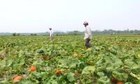 ญี่ปุ่นบริจาคเงิน 2.5 ล้านดอลลาร์สหรัฐให้แก่ผู้ประสบภัยธรรมชาติในเวียดนาม